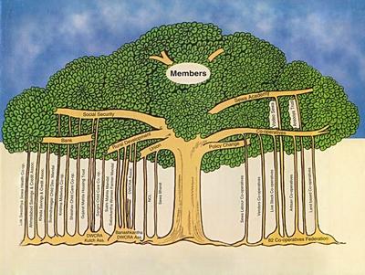 Sewa_banian_tree